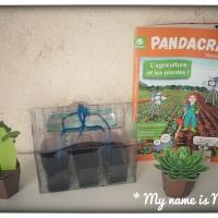 Pandacraft et ses kits créatifs
