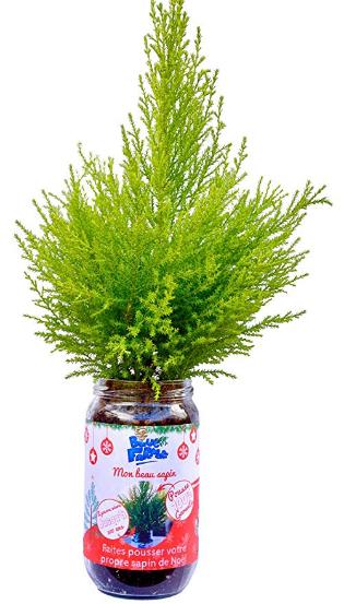 Screenshot_2018-10-21 Blue Farmers Sapin de Noël à faire pousser FABRIQUE EN FRANCE Sapin à faire pousser soi-même Cadeau o[...].png